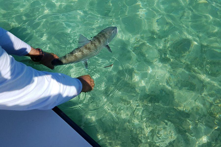 La pêche sur les Flats de Guadeloupe en «Ultra Light» !!!