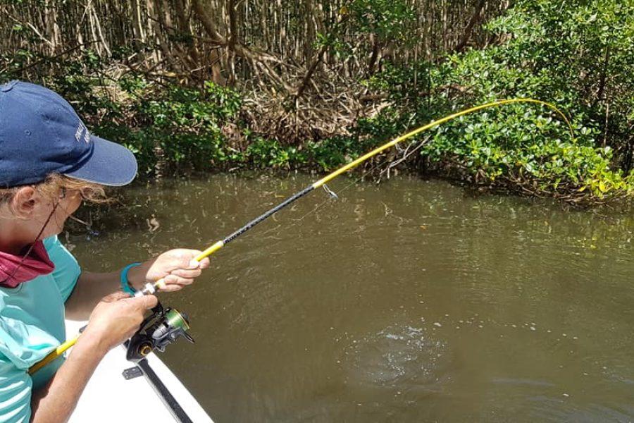 Jolie Tarpon de mangrove