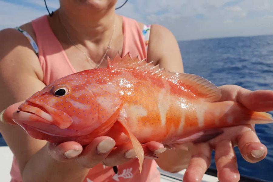 Première journée de pêche en Guadeloupe
