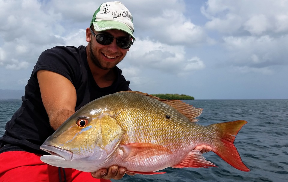 A nice mutton snapper caught in the lagoon of Guadeloupe