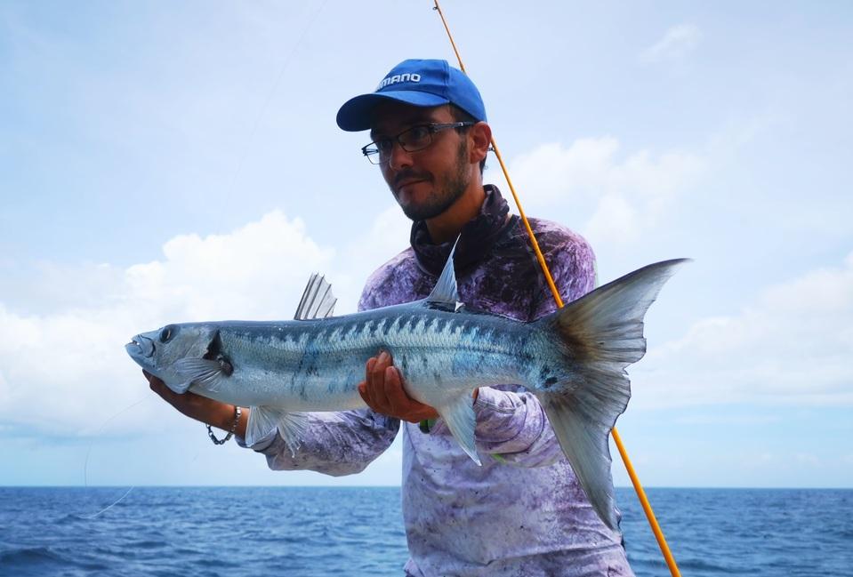 Un beau barracuda du large.