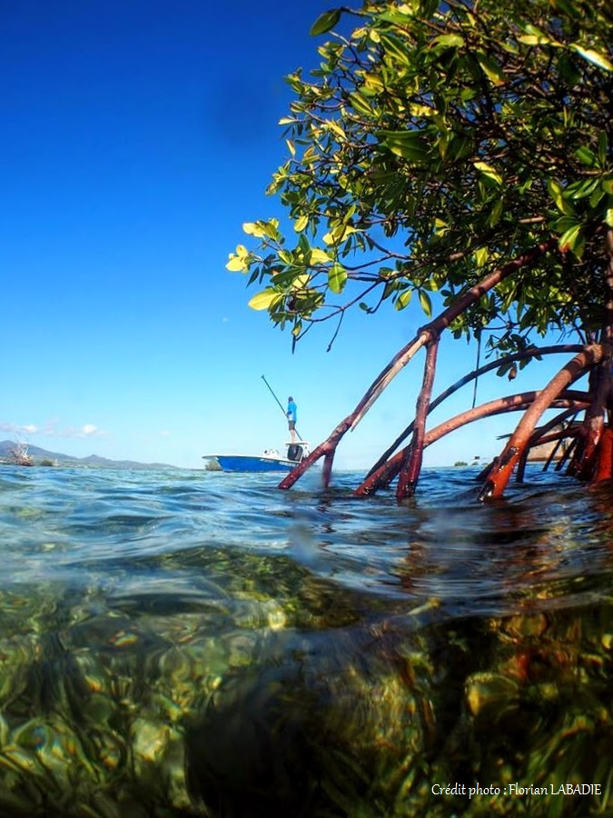 Boat fishing in the mangrove of Guadeloupe