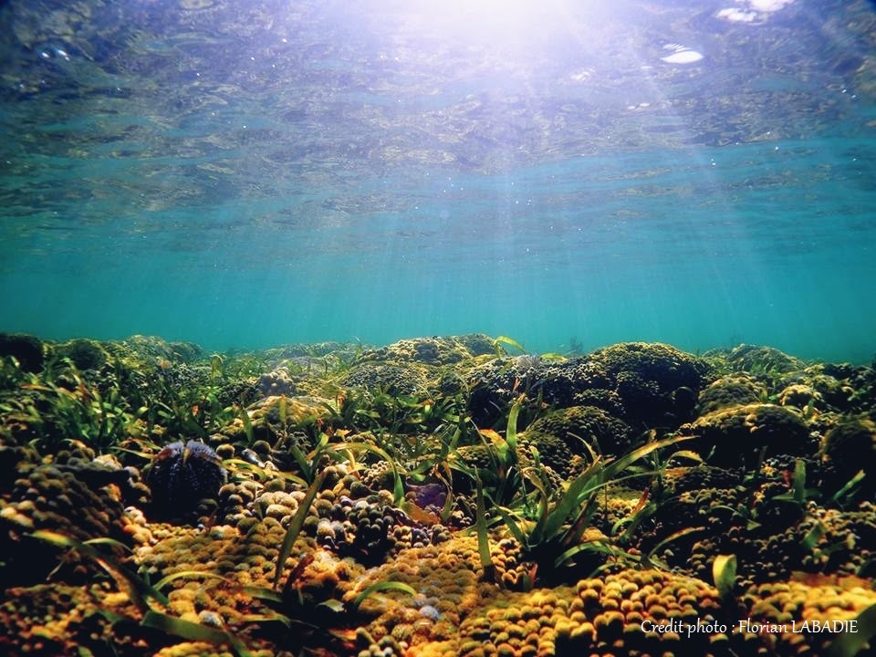 Coral reef in the bottom of the lagoon