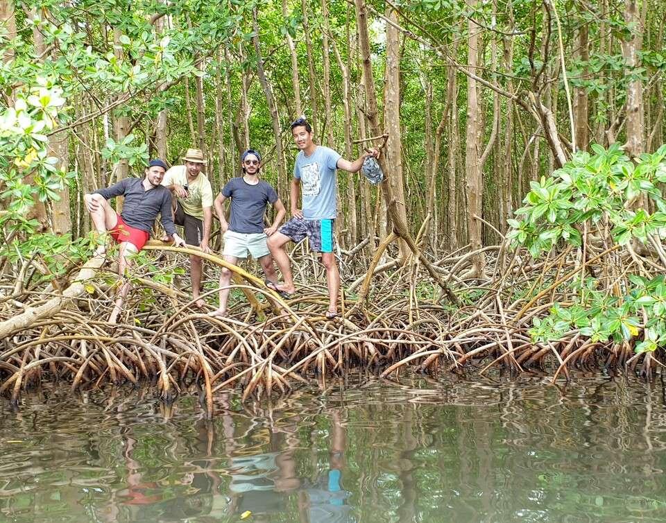 Découvrez la mangrove en groupe