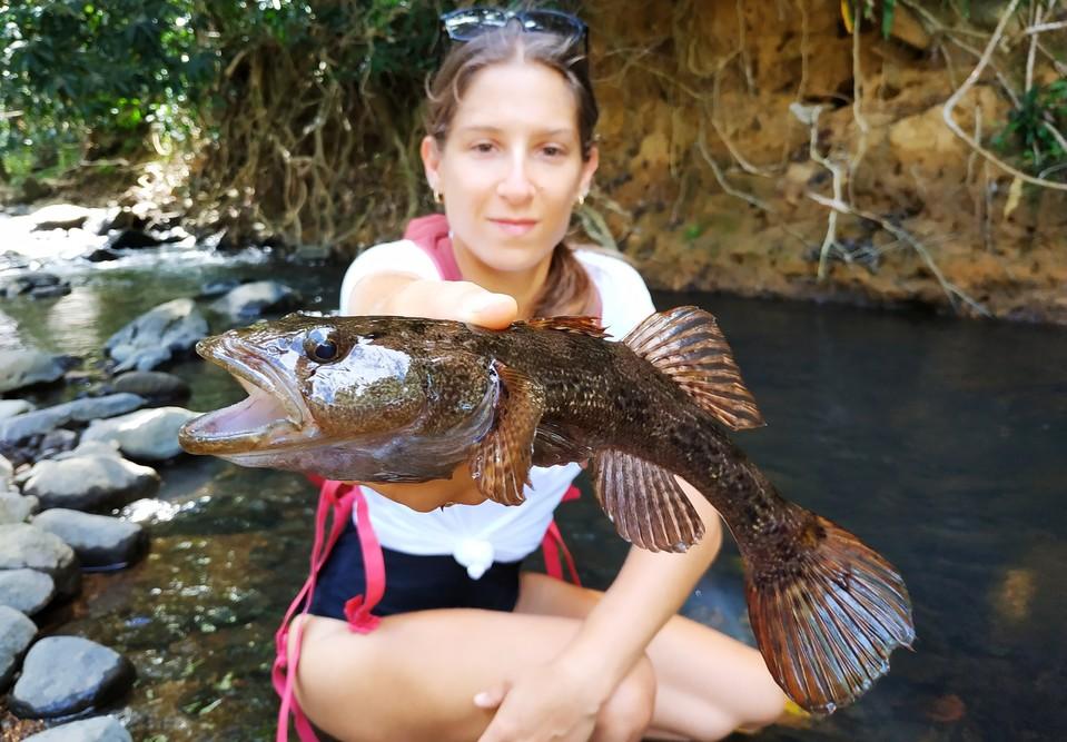 Les poissons de Guadeloupe : le dormeur.