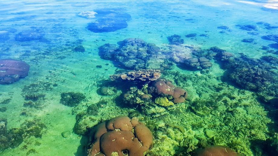 Les flats et leurs fonds coralliens.
