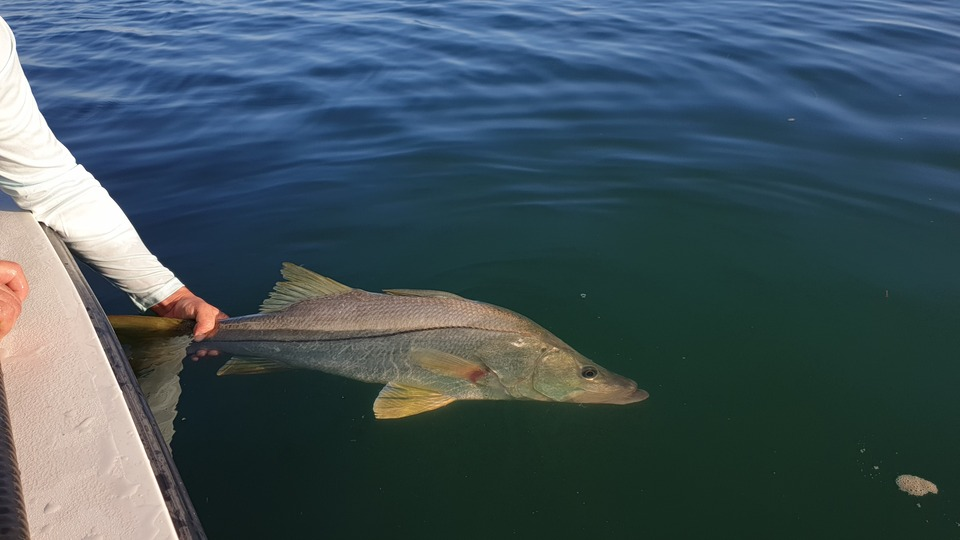 snook guadeloupe