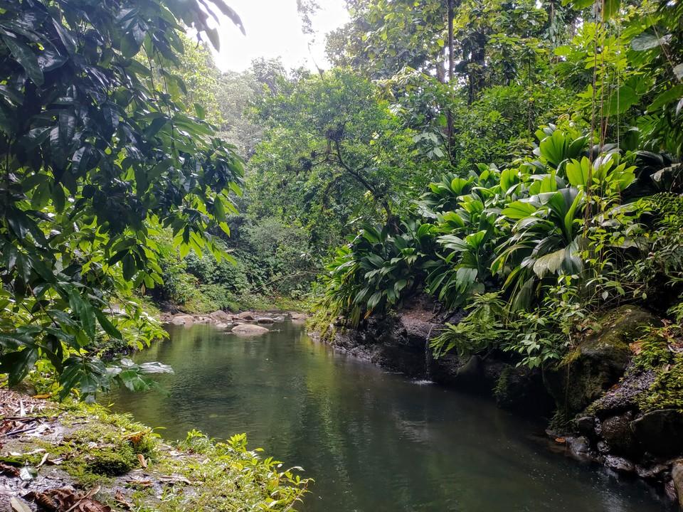 Une des nombreuses rivières de Guadeloupe.