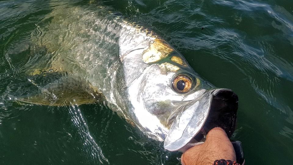 fish guadeloupe